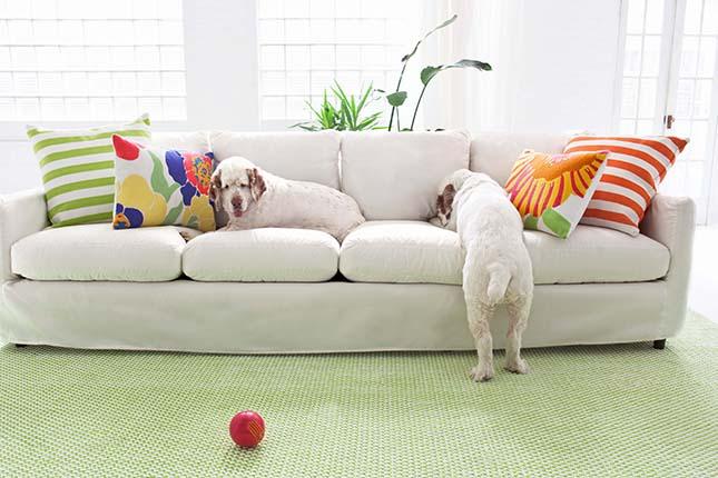 Cómo Acondicionar Tu Casa Para Tu Mascota Y 3 Inventos