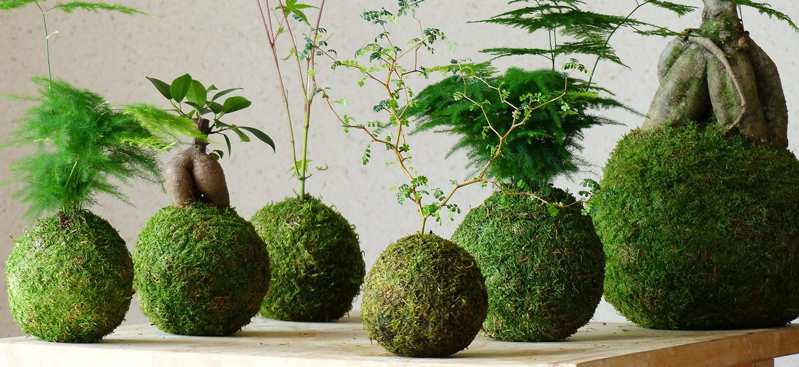 C mo crear tu jard n colgante con kokedamas un hogar con for Jardines colgantes para interiores