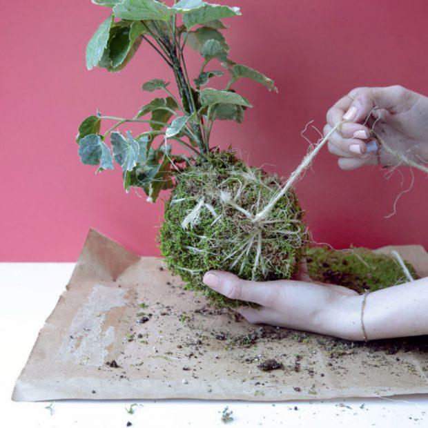 Los expertos en reparación de todo tipo de averías del hogar de Reparalia te traen ideas, consejos y trucos para decorar tu casa, hoy contándote todos los secretos de jardinería de los kokedamas japoneses.