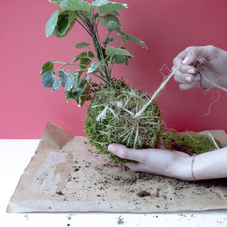 C mo crear tu jard n colgante con kokedamas un hogar con for Jardineria en casa
