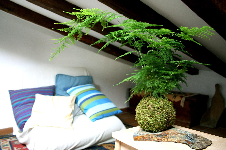 C mo crear tu jard n colgante con kokedamas un hogar con for Como tener un jardin en casa