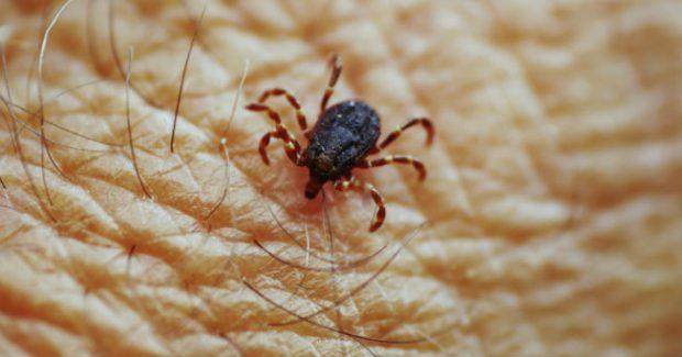 Los expertos del hogar de HomeServe te dan remedios domésticos y eco sostenibles para ahuyentar moscas, mosquitos y otros insectos molestos en tu casa o de vacaciones