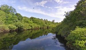 Imagen del Amazonas (Google).