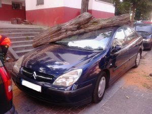 Imagen del árbol que destrozó mi coche (Luis Moreno).