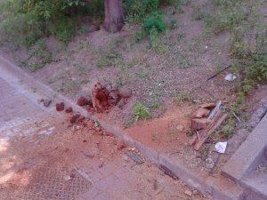 Restos del árbol podrido (Luis Moreno).