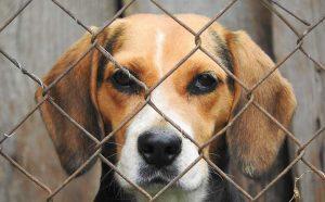 Un perro encerrado (ROYAL CANIN/MASCOTEROS SOLIDARIOS)