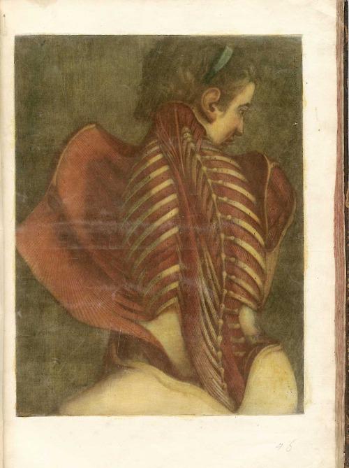 Ilustration de anatomía - Jacques Fabian Gautier d'Agoty (1717-1785)