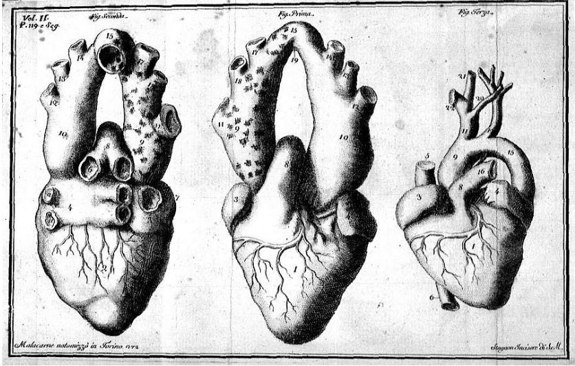 Anatomía del corazón - Vincenzo Michele Giacinto Malacarne (s. XVIII)