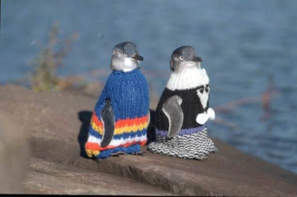 Pingüinos abrigados
