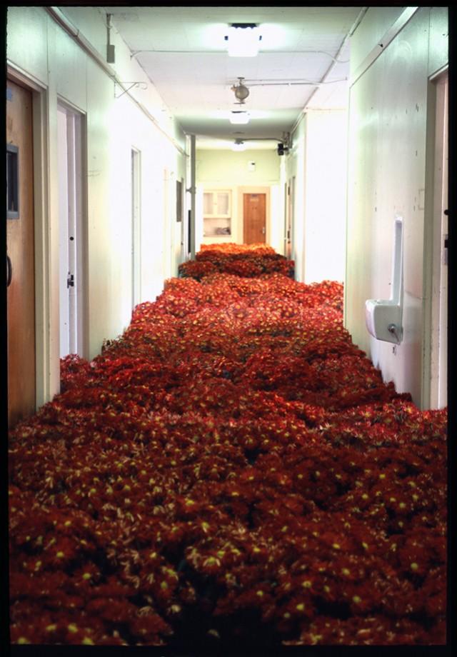Crisantemos en uno de los pasillos del MMHC
