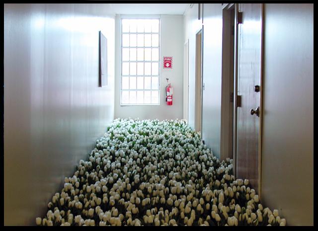 La unidad de psiquiatría infantil, cubierta de tulipanes blancos