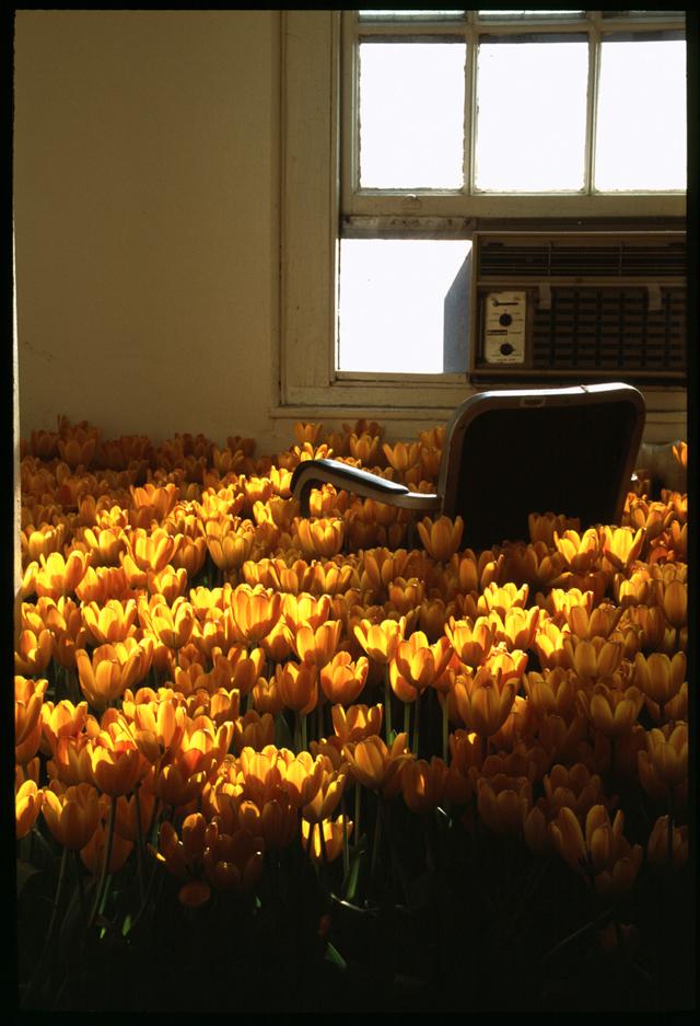 Uno de los despachos que Anna Schuleit llenó de tulipanes naranjas