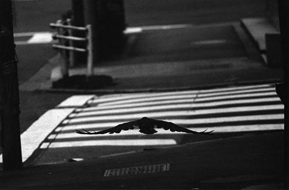 """Masahisa Fukase - """"Ravens"""""""