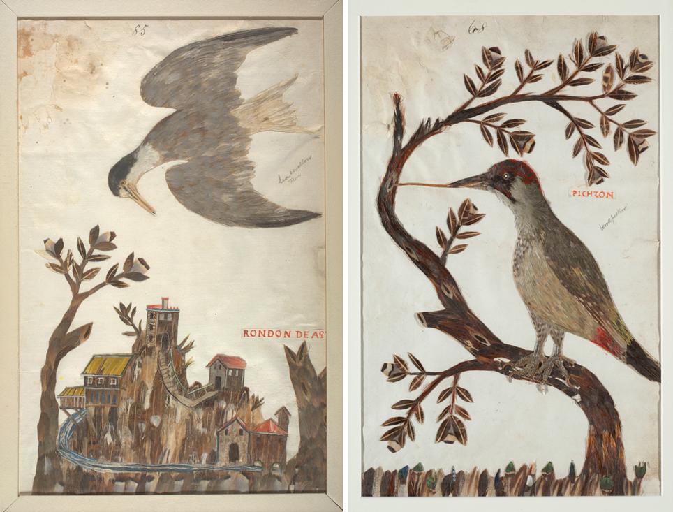 Un charrán y un pájaro carpintero