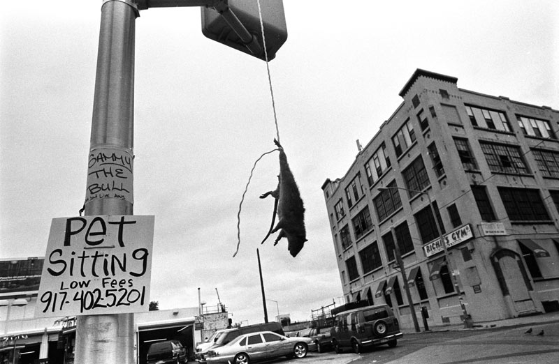 Una señal de aviso para los soplones colocada por los Latin Kings en Brooklyn (Boogie, 2005)