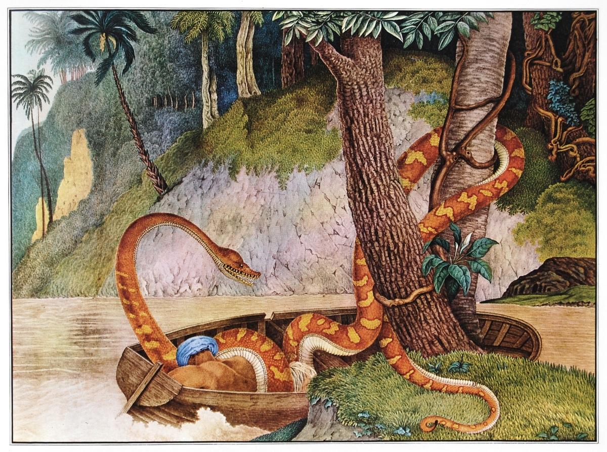 'Die Königsschlange' - Aloys Zötl