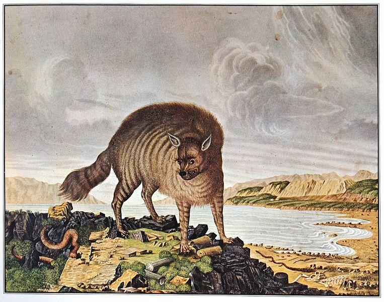 'Die gestreifte Hyäne' - Aloys Zötl