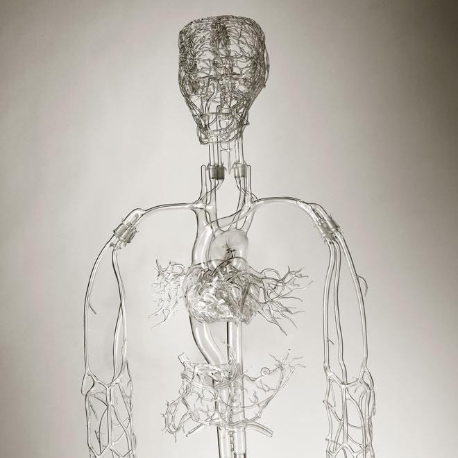 Detalle de 'Mrs. Einstein', el sistema vascular más completo realizado por Farlow y su equipo