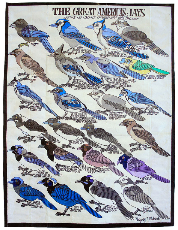 'The Great American Jays' - Gregory Blackstock