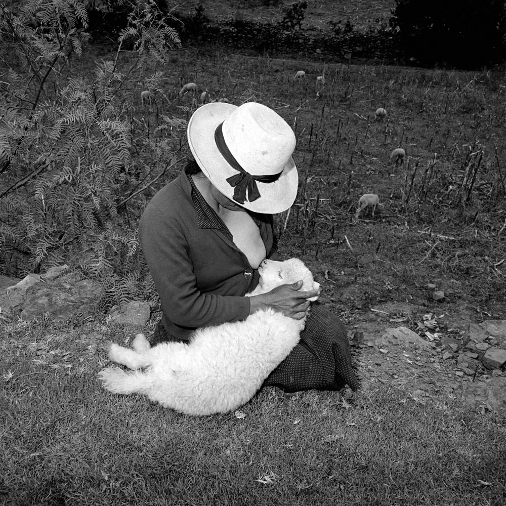Catalin Valentine's Lamb, Ancash, Peru, 1981 © Rosalind Solomon 2010/Courtesy Bruce Silverstei
