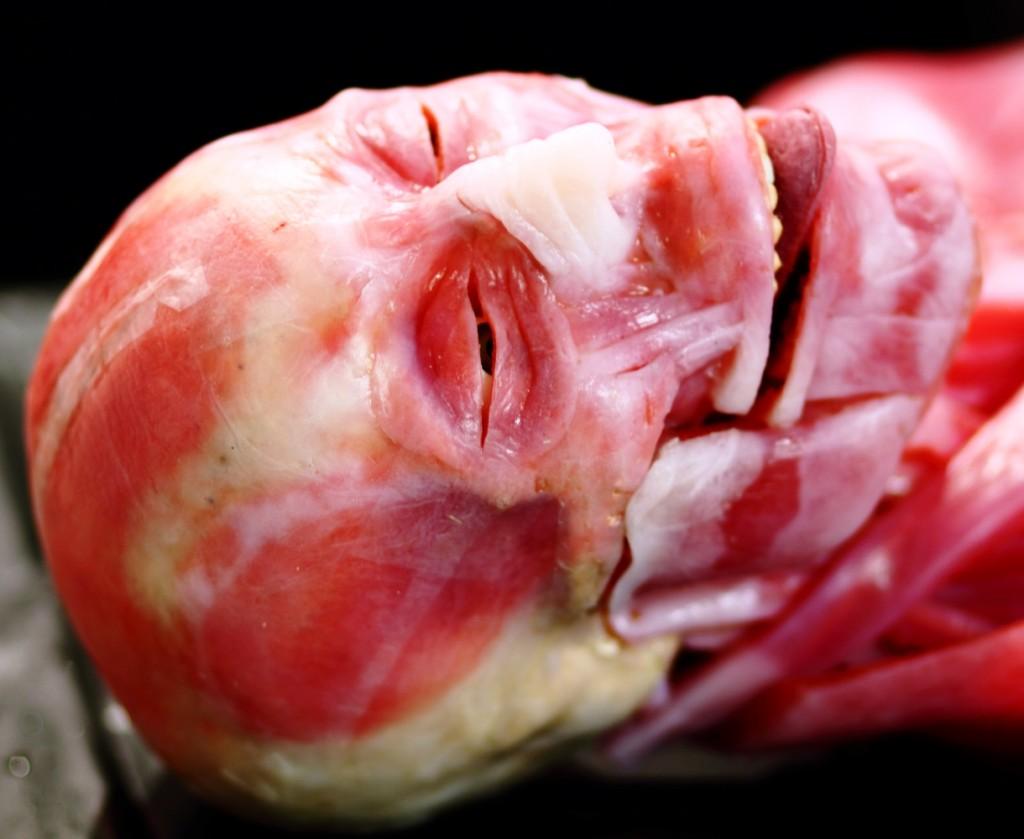 SynDaver-pic-skull