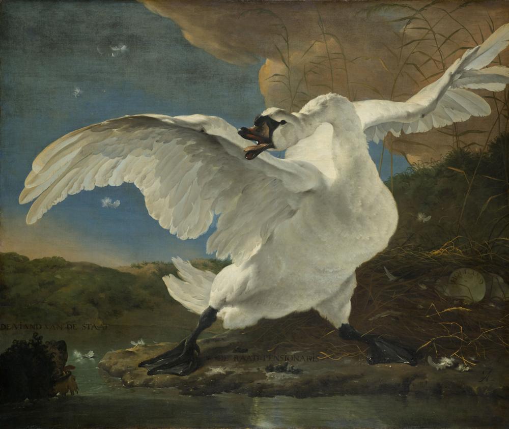 'El cisne amenazado' (c.1650), de Jan Asselijn