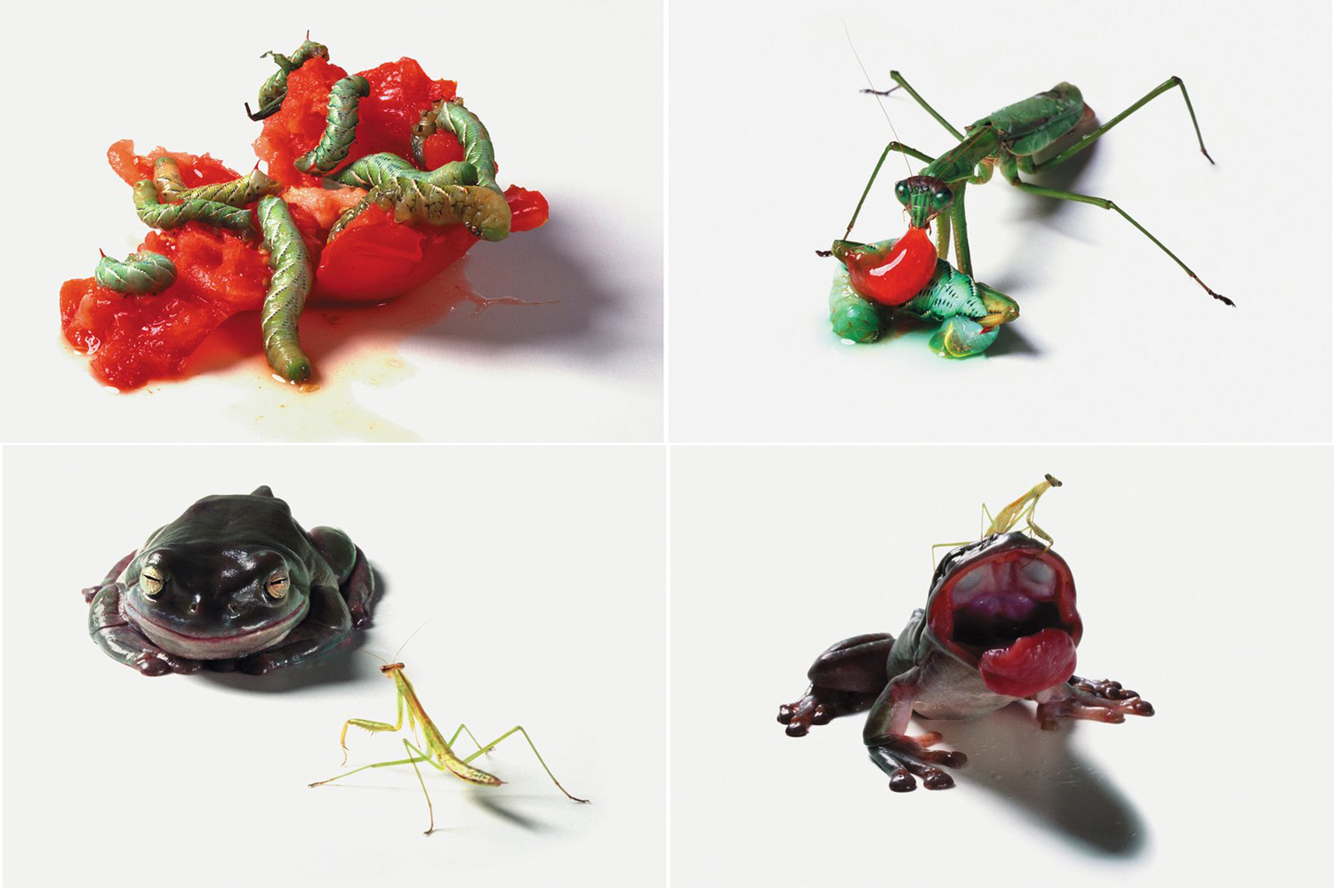 Food Chain - Catherine Chalmers