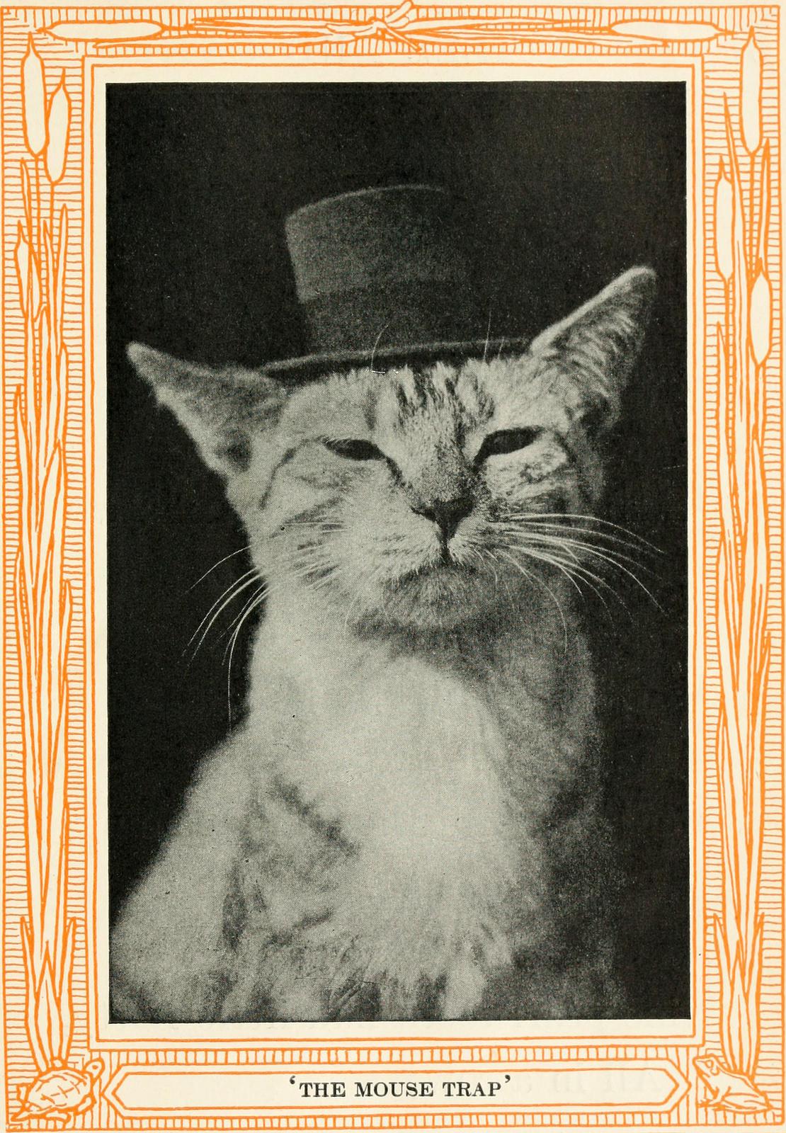 """""""Trampa de ratones"""". Ilustración de un libro de 1911 de cuentos sobre gatos"""