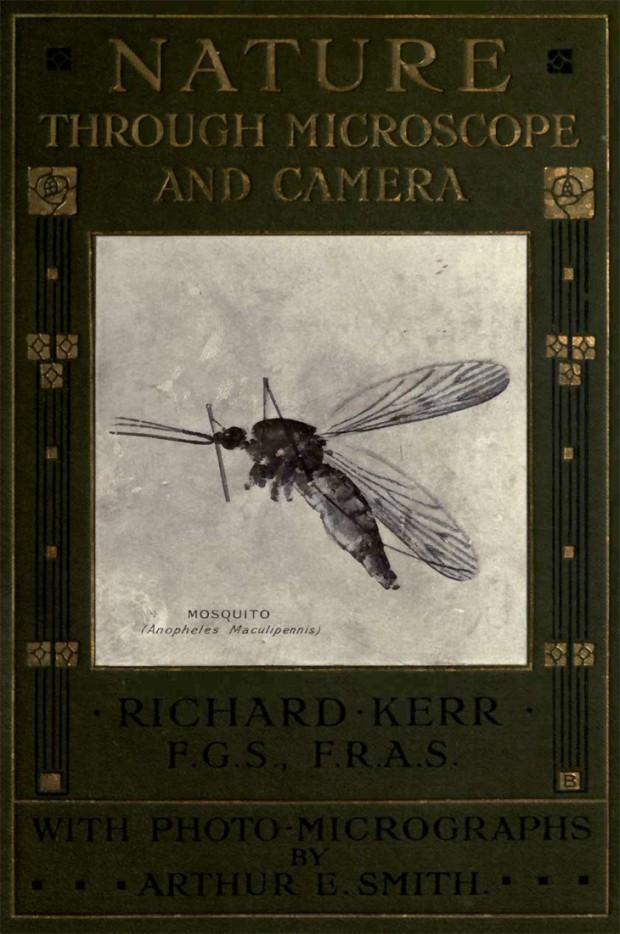 'Nature through Microscope and Camera'