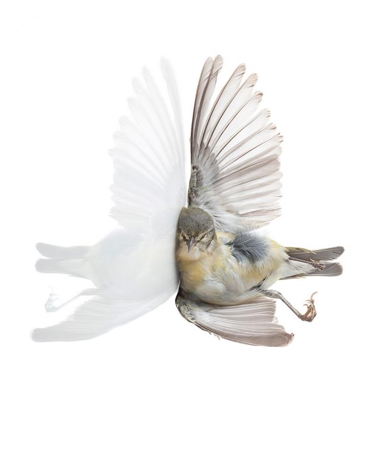 'Impact (Tennessee Warbler)'- Miranda Brandon