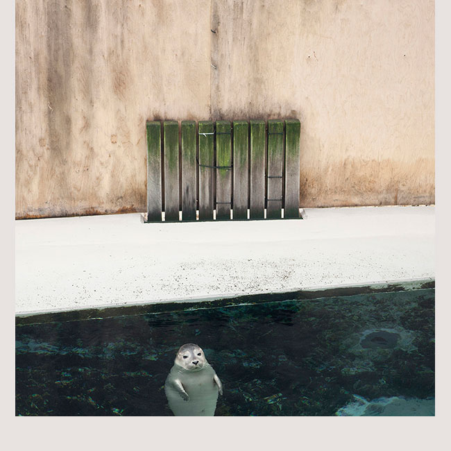'In Situ' - © Eric Pillot