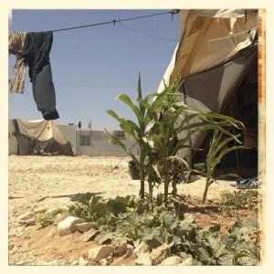 Plantas. Foto: Nour (17 años) - Inside Za'Atari