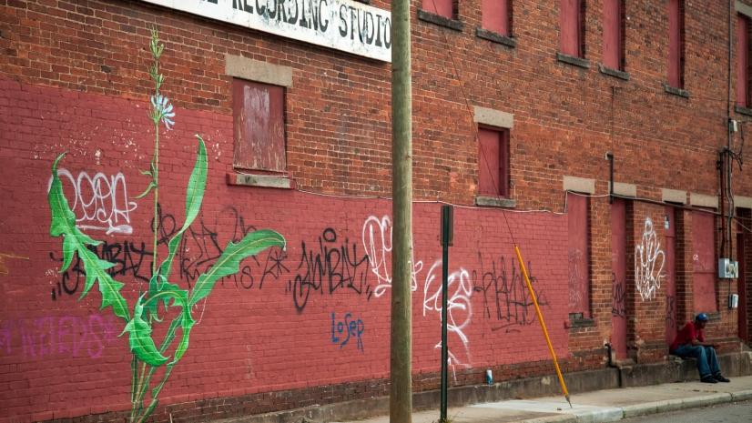 Un aster pintado en Asheville (Carolina del Norte), una de las 'malas hierbas' del proyecto 'Weeds' de Mona Caron