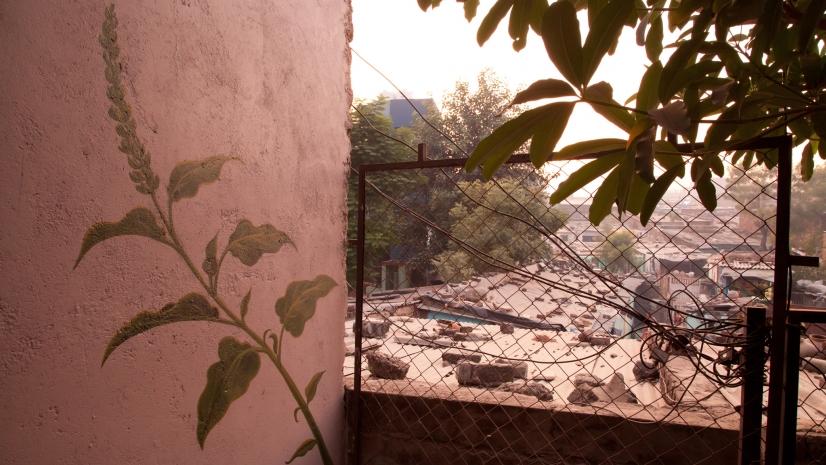 Una de las malas hierbas de Mona Caron en el humilde barrio de Ahmedabad, en la India - Mona Caron