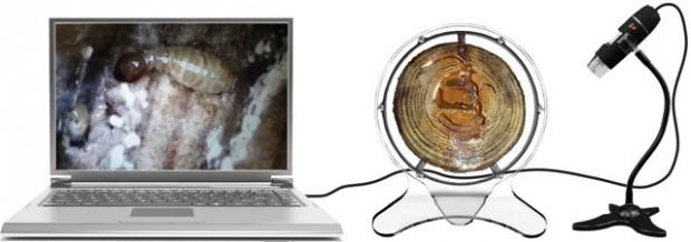 El 'Termitat' con un microscopio electrónico que permite grabar y ver en el ordenador detalles de la vida de la colonia
