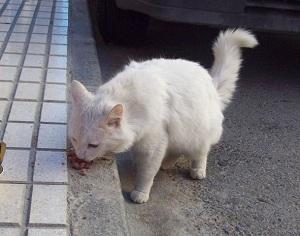 Un gato come en la calle. (ARCHIVO)