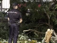 Una rama caída en Madrid. (EFE)