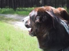 Un perro en el campo. (M. T. )