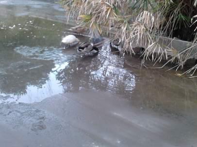 Situación del estanque en el parque de María Luisa (Sevilla), (LUCÍA MATEOS)