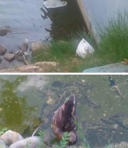 Fotografía de los animales muerto del Parque de Andalucía en Alcobendas. (B.V.)