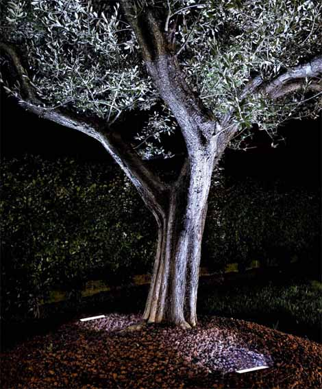 Iluminación para árboles y fachadas.
