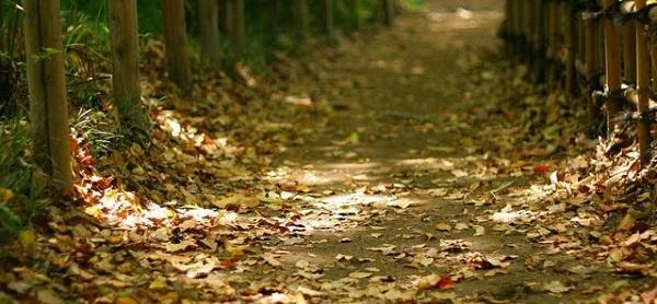 El otoño ha llegado y, con él, frío, lluvia, viento...