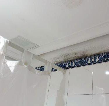 Gusanos un hogar con mucho oficio - Como quitar el moho del bano ...