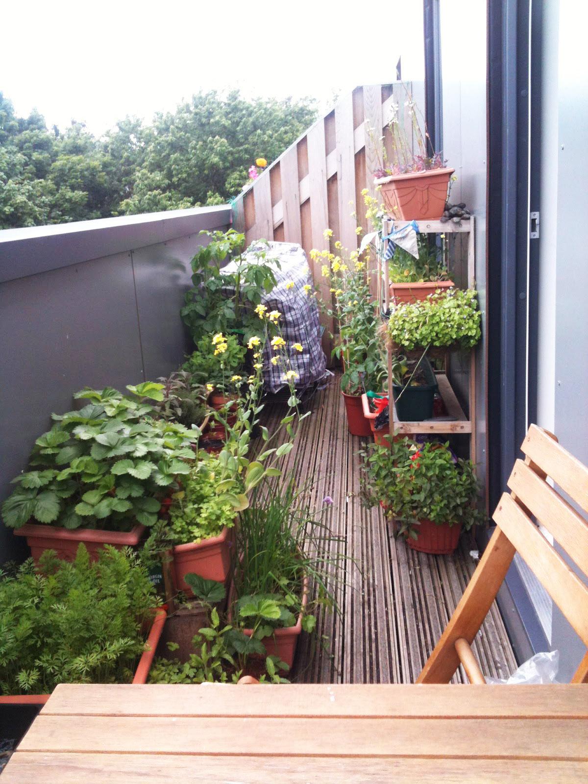 10 consejos para cuidar tus plantas en esta t mida - Plantas exterior mucho sol ...