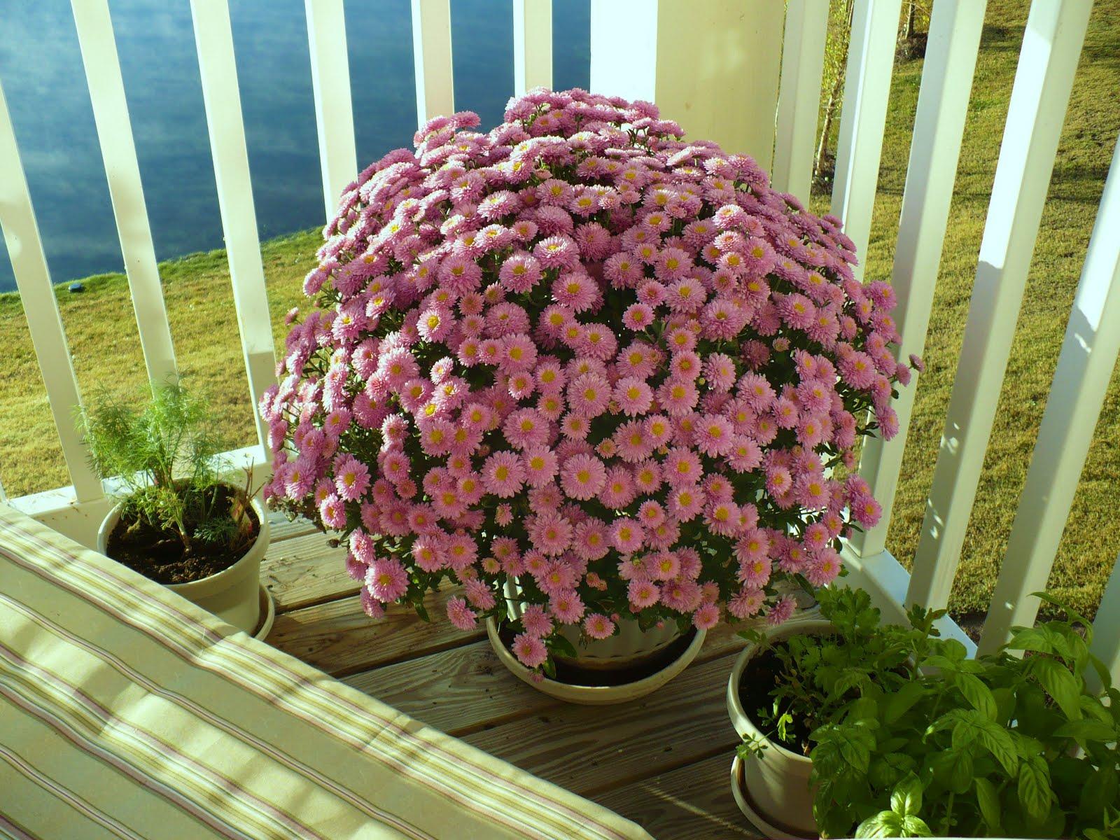 10 consejos para cuidar tus plantas en esta t mida - Flores para exterior ...