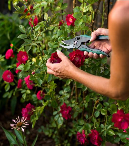 10 consejos para cuidar tus plantas en esta t mida for Jardineria rosales