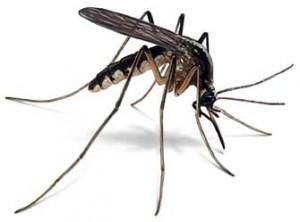 Hoy nuestros expertos en reparaciones del hogar de Reparalia te ayudan a elegir mosquitera para que estéis a salvo en casa de mosquitos, polen, polvo, hojas y otros pequeños invasores molestos y típicos del verano.
