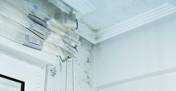 Goteras un hogar con mucho oficio - Humedades en las paredes ...