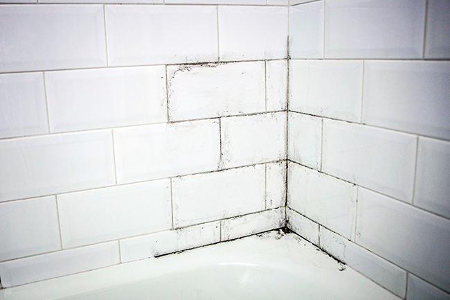 Moho un hogar con mucho oficio - Limpiar moho bano ...