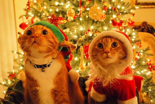 Los técnicos profesionales del hogar de Reparalia, los mejores electricistas de todo el país, a tu disposición las 24 horas, te ofrecen 5 trucos y consejos para ahorrar en la factura de la luz y de la calefacción esta Navidad y durante todo el invierno.